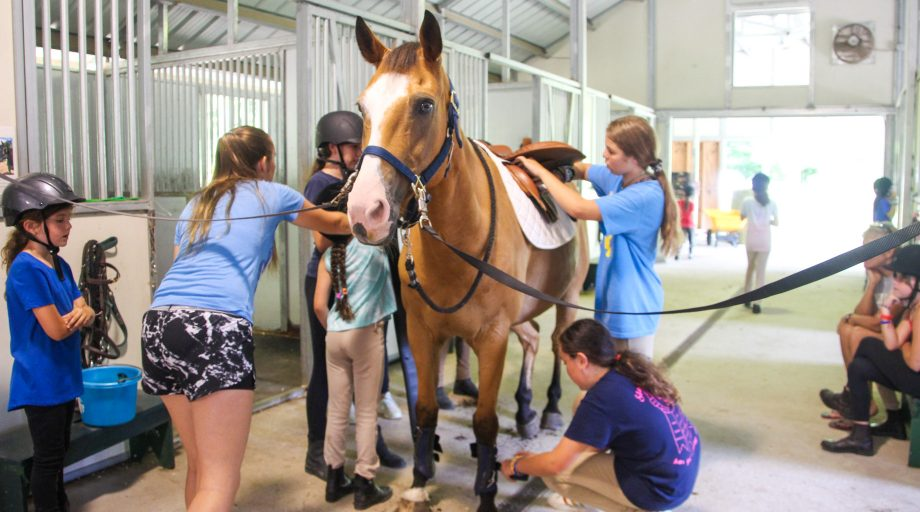 campers grooming a horse